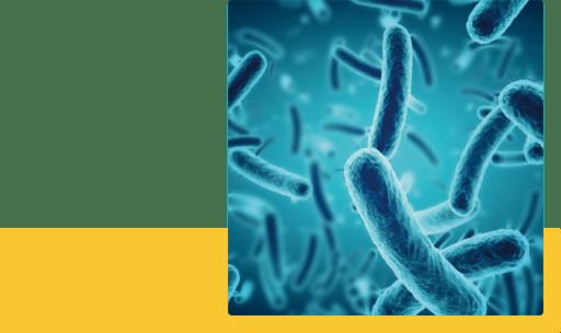 食虫毒予防に繋がる